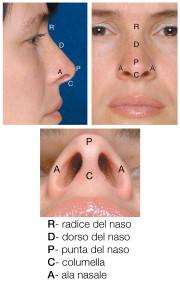 piramide nasale